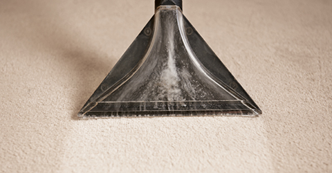 Complete Guide to Carpet Care